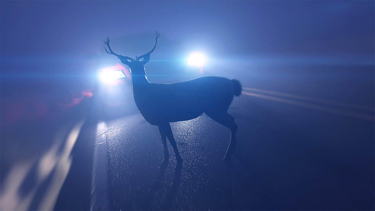 scare deer away from your car
